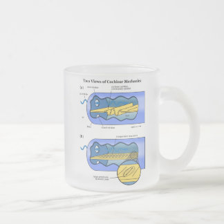 Two Views of Cochlea Mechanics Inner Ear 10 Oz Frosted Glass Coffee Mug