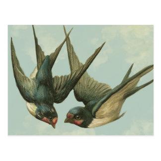 Two Vintage Swallows Postcard