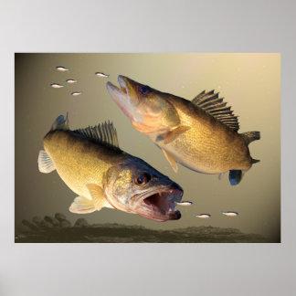 Two Walleye Feeding Poster