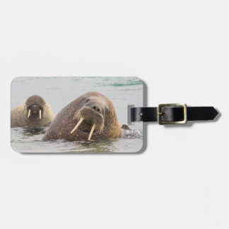 Two walruses in water, Norway Bag Tag