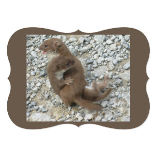 Two Weasels Battle on Pebbly Path Card
