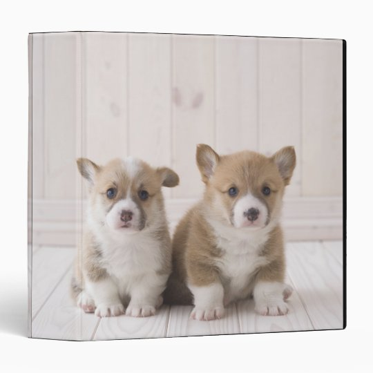 Two Welsh Corgi Sitting Binder
