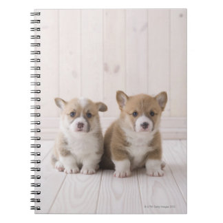 Two Welsh Corgi Sitting Notebook