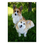 Two Welsh Corgis Cards