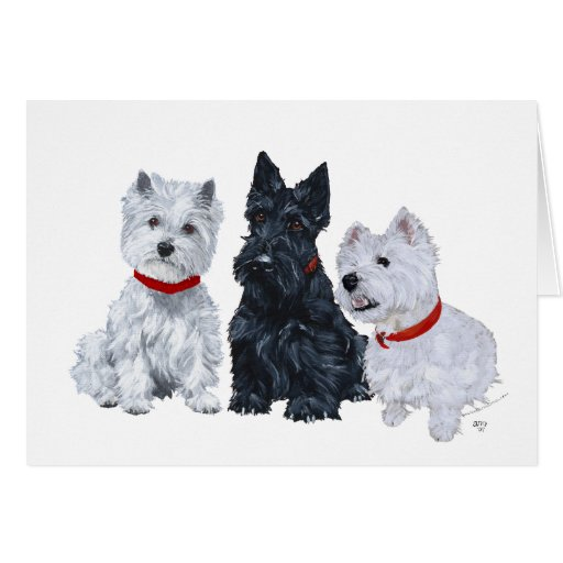 Two Westies and a Scottie Card