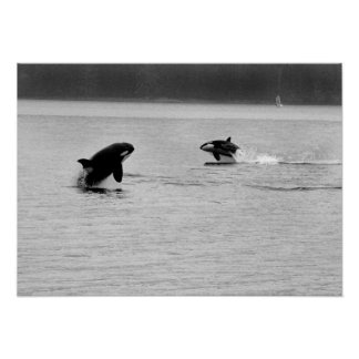 two whales poster