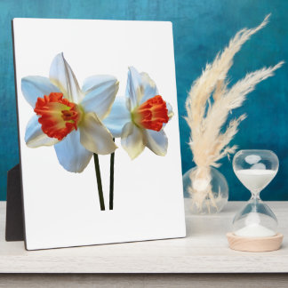 Two White And Orange Daffodils Plaque