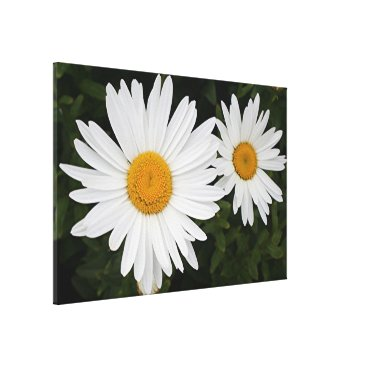 franwestphotography Two white and yellow daisies canvas print