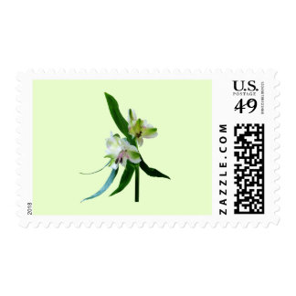 Two White Asiatic Lilies Postage