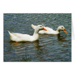 Two White Ducks Cards
