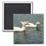 Two White Ducks Magnet
