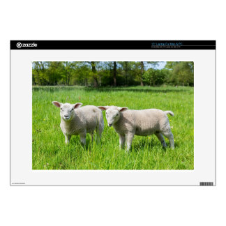 """Two white dutch sheep in green spring meadow 15"""" laptop decals"""