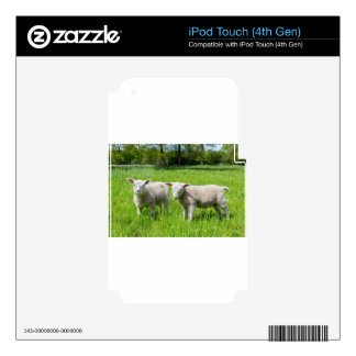 Two white dutch sheep in green spring meadow iPod touch 4G decals