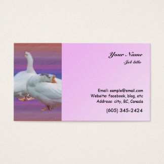two white geese in color  background business card