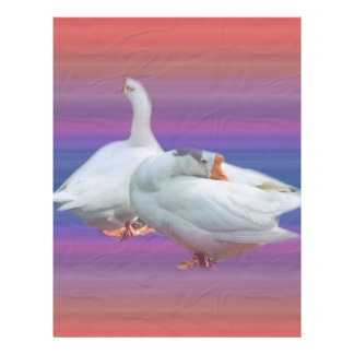 two white geese in color  background flyers