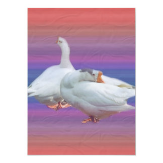 two white geese in fancy  background card