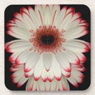 Two White Gerbera Daisy Flowers Coaster