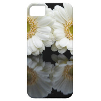 Two white gerberas with mirror image on black iPhone 5 covers