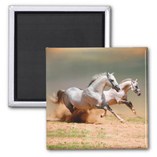 two white horses running 2 inch square magnet
