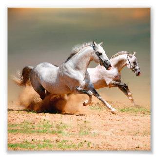 two white horses running photo print