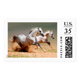 two white horses running postage