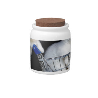 Two white kittens with shopping cart on black.JPG Candy Jars