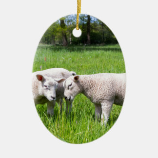 Two white lambs playing together in green meadow ceramic ornament