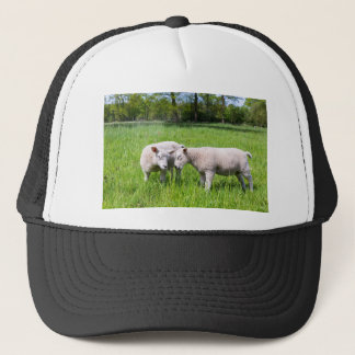 Two white lambs playing together in green meadow trucker hat