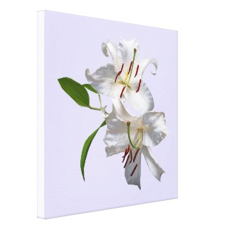 Two White Lilies Stretched Canvas Print
