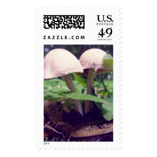 Two White Mushrooms Stamp