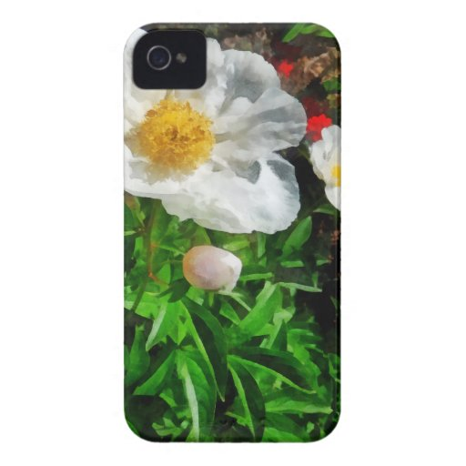 Two White Poppies Case-Mate iPhone 4 Cases