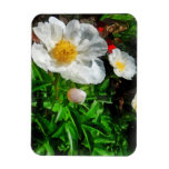 Two White Poppies Rectangle Magnets