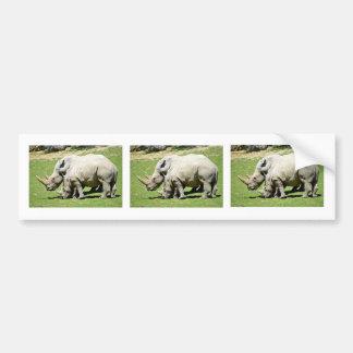 Two white rhinoceros in grass bumper sticker