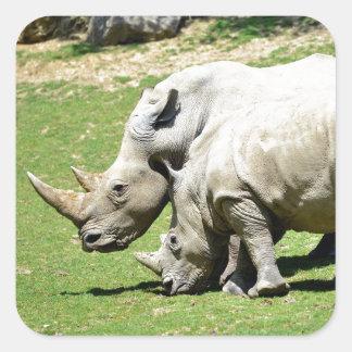 Two white rhinoceros in grass square sticker