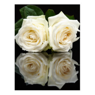 Two white roses with mirror image on black postcard