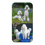 Two White Standard Poodles iPhone 4 Covers