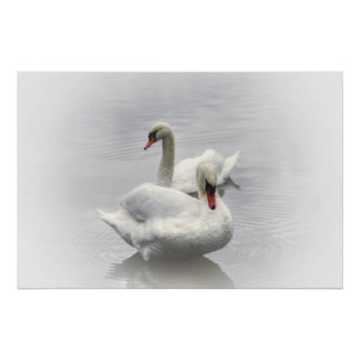 two white swans on a poster