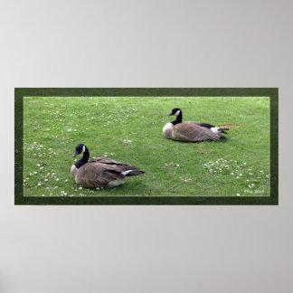 Two wild ducks on green grass. Landscape animal Poster