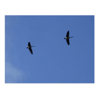 Two Wild Geese- Blue Sky Post Cards