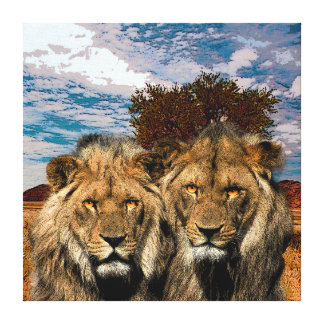 Two Wild Lions On African Savannah Background Canvas Print