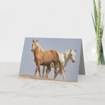 Two Wild Mares Wild Horse Greeting Card