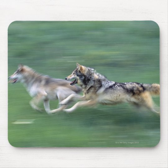 Two wolves in mountain meadow mouse pad
