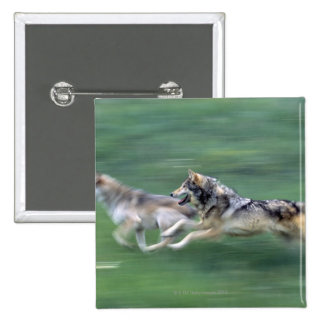 Two wolves in mountain meadow pinback button