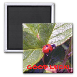 Two Years Old Ladybug Magnet