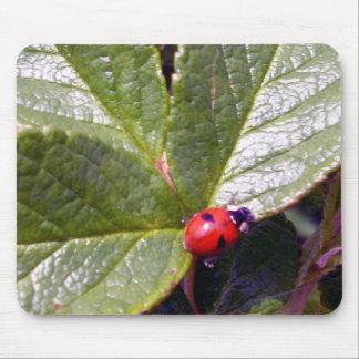 Two Years Old Ladybug Mousepad
