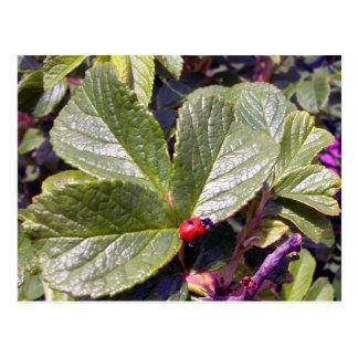 Two Years Old Ladybug Postcard