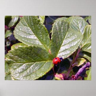 Two Years Old Ladybug Poster