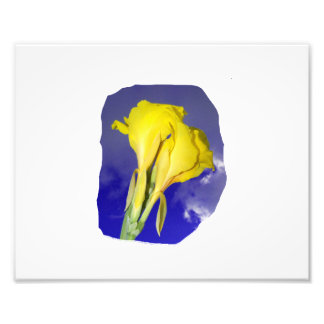 Two Yellow Flowers Blue Sky Photograph