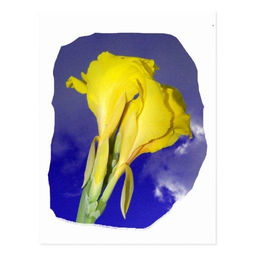 Two Yellow Flowers Dark Blue Sky Photo Post Card