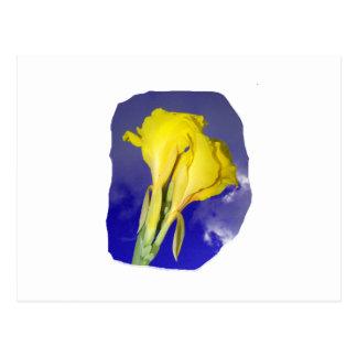 Two Yellow Flowers Dark Blue Sky Photo Postcard